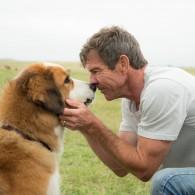 """Trims """"Oskarams"""" nominuotas režisierius L. Hallstromas apie filmą """"Šuns tikslas"""": ši istorija – nepaprasta"""