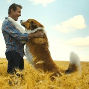 """Filmo """"Šuns tikslas 2"""" režisierė tiki gydomosiomis keturkojų galiomis: visi kartu dirbę tapo geresniais ir laimingesniais"""