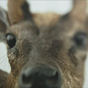 """Pristatytas filmas """"Animus Animalis (istorija apie žmones, žvėris ir daiktus)"""""""